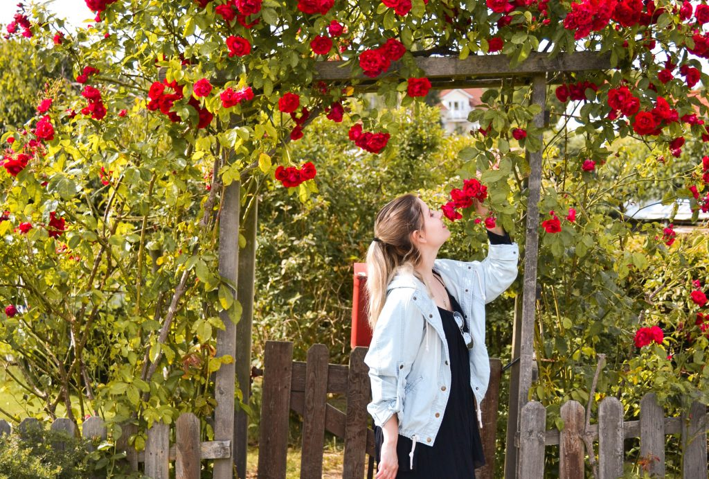 Smelling roses in Brännö, Sweden